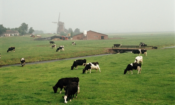 holland farmland